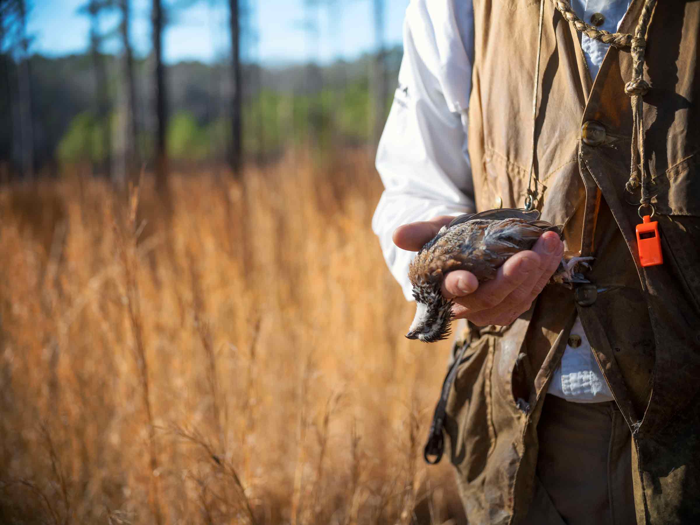 Hunting Adventures